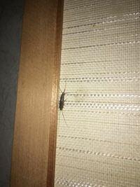 この虫がよく和室のドアにいるのですが、名前を教えてください。