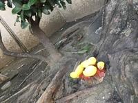 このキノコの種類は何でしょうか? 道端で、奇抜なキノコを見つけました。 傘は、黄色で柄は赤茶色です。 西日本です。