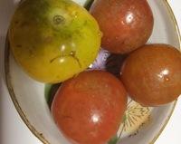 家庭菜園のミニトマトについての相談です。  家庭菜園で育てたミニトマトが、画像のようにどれも傷だらけになっています。  これは病気でしょうか? 病名、対策方法、食べることが可能かど うか教えて下さい。  宜しくお願いします。