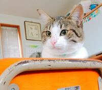 猫の鼻の上にシミのようなものができました。 これは何だと思いますか?? すごく心配です… なるべくはやく病院へ連れていこうとは思っていますが、病院へ行くまでに対処法などがあれば教えてください!!