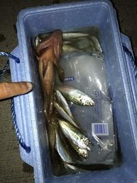 この魚なんですか?? 主人がすごい気持ち悪い魚を釣ったらしいんですが周りの釣り人から褒められたらしいです。 深海魚かと思って調べてみたけどわかりません でした。 ご存知の方いますか ??