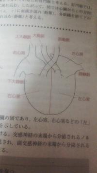 生物の問題です。 静脈しか弁がないと思うのですが なぜ動脈にもあるですか?