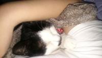 猫は飼い主を舐めますが、理由は愛情表現の回答が多いです。 私なりに考えてみたのですが、猫とは天敵から自分を守る為に体を舐めて、臭いを消しますよね?   これは飼い主を舐める事に共通していませんか?  天...