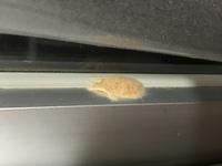 窓のサッシに茶色いワタのようなものがついています…これは虫か何かでしょうか…