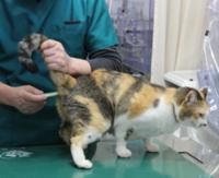 猫には肛門体温計より耳体温計の方が使い勝手がいいですか?