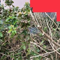 剪定について 写真の植物を剪定したのですが、切った後に切り過ぎたかな? と枯れてしまわないか不安になってきました(;_;) どうでしょうか? 植物の名前も教えてください。 福岡市 剪定日12月中旬