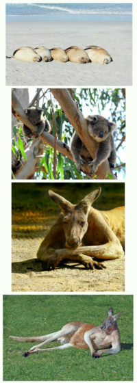オーストラリア大陸って、他の大陸と比較して「平和な大陸」と呼べますか?