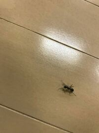 胴体が赤い蟻がいたのですが、なんだか分かりますか?