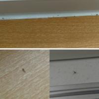 窓を閉めているのに小さい虫が入ってきます。なんの虫かはわかりませんが、写真のように、窓付近に小さい虫の死骸があります。若干赤っぽい色の虫もいました。 窓は南向き2箇所、西向き1箇所で、西向きの窓の部屋...