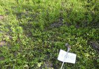 CO2削減のために原発推進の人は CO2を吸ってくれる庭の雑草をどうしてます? 草刈り機や除草剤で退治してますか? 自分の庭だから自由だけど どんな考えか知りたいです。