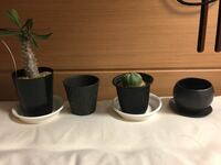 鉢のサイズについてです。 鉢を購入したのですが想像より小さめでした。 今のプラ鉢から隣の鉢に移し替えたいのですが さすがに鉢のサイズが小さすぎるでしょうか アドバイスお願いします。