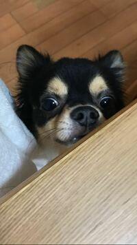 犬大喜利ですฅ՞•ﻌ•՞ฅワン♥ 彼は何を見てしまったのでしょうか?