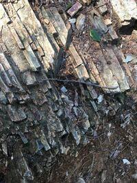 先日、山登りをした際に写真の岩を見つけました。 この現象や、名称などは何と言うのでしょうか?