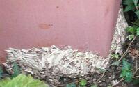 このハチの巣は、何のハチの巣だかわかりますか? もしくはハチではないでしょうか? 巣に近づくとミツバチを一回り小さくした位のハチが出てきます。 スズメバチなどのように業者の方に頼んで取ってもらった方...