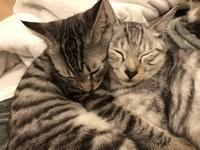 ☆譲渡型猫シェルターの利用目的やアイデアについて  今年の夏、猫シェルター兼カフェをオープンさせます。  保護猫活動を2年経験後、保護猫と里親希望の方との架け橋となるべく両者がゆっく りと集える場所と...