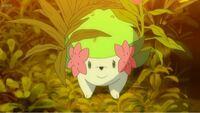 ポケモン アニメ サンムーン でマオがまさか幻のポケモンのシェイミをゲットしたことについてどうお感じですか? . てか、なんでシェイミが普通に草むらから出てくんだよ?  前髪特別イーブイゲット、最速最終進...