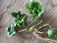 セリに似ていますが、この植物は何か教えていただけますか?  クレソンが生えている水辺にあった植物です。  セリに似ていて、セリかドクゼリか調べていました。 しかし、なんとなく葉のつ き方が違うような気がして、知恵袋の先生方に教えていただきたいと思い、投稿致しました。