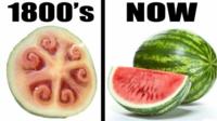 品種改良は聖書で禁止すべきでしたね