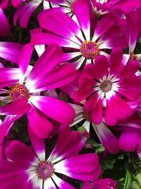 一年草か多年草か分かりません…。 こちらの花の名前を教えてください。