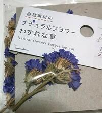 セリアでドライフラワーを買いました。 忘れな草と記載がありますが、スターチスではないか?と気付きました。 しかし、ドライなので判別が難しいです。 お花に詳しい方、教えてください。