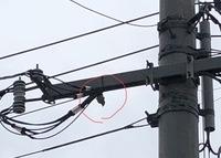 昨日から近所の電信柱の電線にすずめ引っかかっていますが、こういう時は、どうしたらいいのでしょうか? わかりにくい写真ですみません
