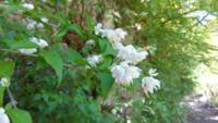 ご存じの方がいらしたらお教えください。 山歩きで見つけたこちらの植物の名前は何でしょうか?