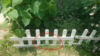 除草剤のラウンドアップを芝生こぼしてしまいました…。 芝生や花壇の植物を刈らさないように、雑草(タンポポ、カタバミなど)にラウンドアップを筆でちまちま塗っていたのですが、花壇の側でこ ぼしてしまいまし...