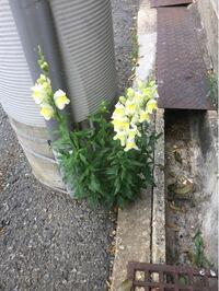 花について質問です。 これは何という花ですか?また、こういう花を写真で撮って名前がわかるようなアプリありますか?