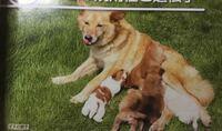 このかわいい犬の犬種教えてください! 雑種ですかね?