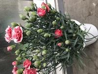 この花の名前を教えてください。植木屋さんか詳しい方なら分かりますでしょうか?