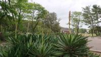 公園にアスパラガスみたいな植物が生えていました。 似てるけど、アスパラガスじゃなさそうですʅ(´⊙⊙`)ʃ この植物の名前を教えてください!