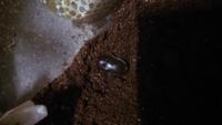 カブトムシの種類を教えてください! 先日、カブトムシの蛹について質問させていただいた者です。 黒くなっていた幼虫2匹ですが、本日、生きていて羽化していることが確認できました(´;ω; `)感動です!  2匹とも...