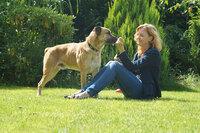 犬種同定のお願い。  添付画像の犬種を知りたいです。色々調べましたが、インドのCONBAIという犬に似てるように思いましたが、確信はもてませんでした。  よろしくお願いいたします。◾️参考 URL 添付画像元...