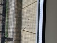 写真に写ってる窓に付いた小さい虫の名前を教えて欲しいです。