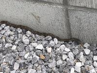 家の庭に蛇が出ました。赤ちゃん蛇のようですが、種類わかる方教えて頂きたいです。