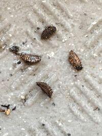 家庭菜園初心者です。きゅうりをプランターで育てているのですが、土の中からたくさんの虫が出てきます。 何の虫かわかる人いますか?この虫がいると根っこなど食べられてしまいますか? また、虫が湧かなくする...
