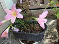 可愛い花のですが名前がわかりません。ご存知の方は教えてください。