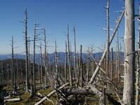 酸性雨によって、木々が死に絶えるってガセだったのですか? なんかこの画像のように酸性雨によって、木々が死に絶えた森というのを以前頻繁に目にしました。 ですが、最近はあまり酸性雨を耳にしなくなったような。  あと、どこかで実は酸性雨が植物にすさまじく有害というのはほぼガセだったらしいというのを聞きました。 多少酸性の雨が降ったからといって、簡単に死に絶えるほど木々はやわじゃない、他の要因を...