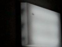 部屋の蛍光灯の中にゴキブリ?みたいな虫がいます。  正直気持ち悪く、蛍光灯の中で暴れ回っています。   どうすればいいか教えてください!