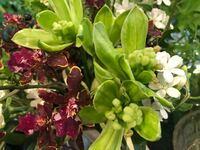 この緑色の花の名前を知っている方いませんか?