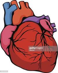 野生動物を生で食べても、心臓と精巣は寄生虫や病気の心配がないのですか? 野生動物を仕留めても、生で食べたりなんかしたら寄生虫や病気になる可能性もある。 しかしながら、心臓と精巣だけは生で食べてもそれらの心配がないため。  火を起こせない状況では、非常食として生の心臓と精巣を食べることもあると。なぜ危険性が極めて引くのでしょうか…。  どうなのでしょう、これらって真実ですか? それとも...