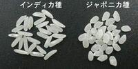 タイ米を主食とする国 日本の米を食べると、どんな印象なのでしょう? べちゃべちゃして美味しくない、ということになるのでしょうか?