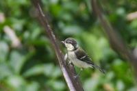 伊吹山で撮った鳥の名がわかりません キビダキのメスかとも思いましたが頭部の色がハッキリ分かれてるので? ご存知の方よろしくお願い致します