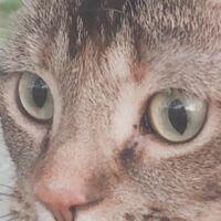 うちで飼ってる猫の目の色について質問です。真ん中が薄い緑で外側が薄い黄色の色の目なのですが、調べてもでてきません。ヘーゼル色かな?と思ったのですが画像を見たところちょっと違かったので、わかる方教えてい ただきたいです。