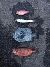 この赤い魚なんて言う魚ですか?