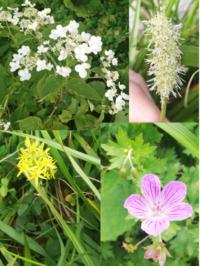 植物に詳しい方教えてください!!(3) 写真の4種の植物は山で見つけました 植物の名前を教えてください  また、もしこの中に高山植物があったら教えてください