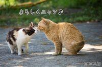 野良猫さんは、下の画像の様な感じで 仲良しさんになって行くのですか?