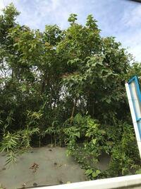 写真中央付近の花が咲いている木は 何という木ですか?  ご存知の方、何卒ご教示下さい。 よろしくお願いします。