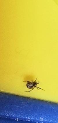 蜘蛛に詳しい型番教えて下さい。 部屋に置いてあった、プラスチックの人形に、蜘蛛が巣を作っていました。 とても、小さい蜘蛛ですが、殺すこともできませんし、ベランダに人形ごとだしました 。 このまま放置...