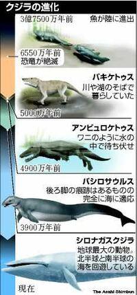 クジラやイルカの頭の噴気孔。 元は四足歩行の動物で海で生活するようになり頭に噴気孔ができたのかと思いますが、進化とはそんな都合よくできるのでしょうか。  いちいち口出すのだるいわー と思って頭に穴がで...
